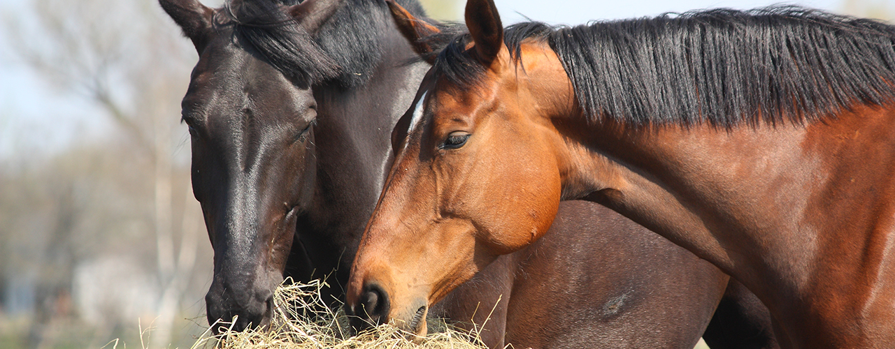 Equine Services at McGregor Veterinary Services