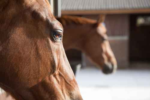 Equine Services from McGregor Veterinary Services